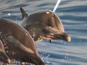 """Decor composición Nº7 """"Delfines"""""""